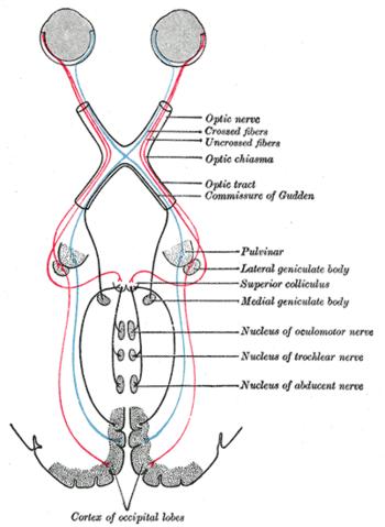 myopathia látás mértéke