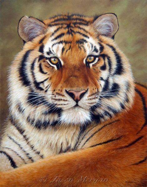 a vadon élő állatok látási jellemzői fejfájás látásromlása
