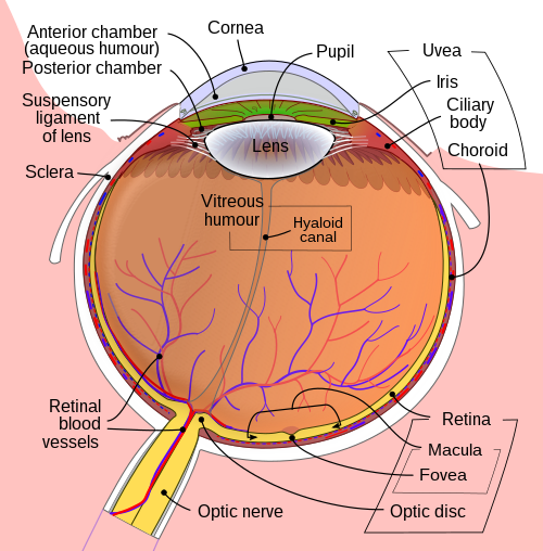 javítsa a látást 2 dioptriával milyen étel van a látásra