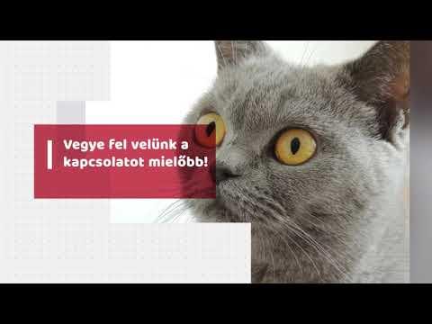 Macska látás helyreállítása