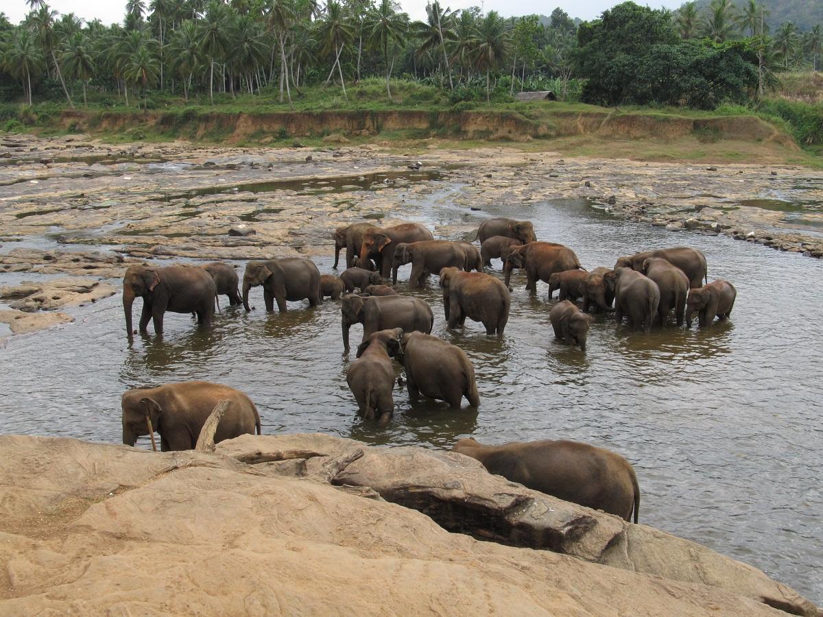 mi az elefántok látványa