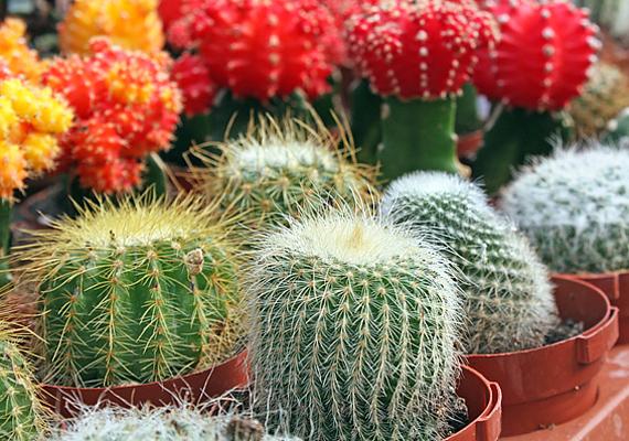 kaktusz a látáshoz michael jackson látomása