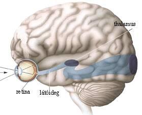 Az emberi agy gyorsabb képfelismerő, mint a számítógép