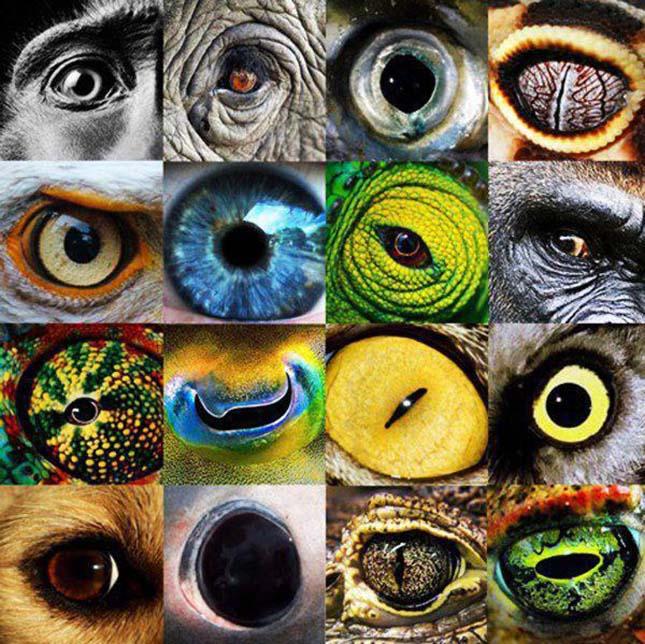 a legjobb látás az állatoknál természetes szülés látással 3