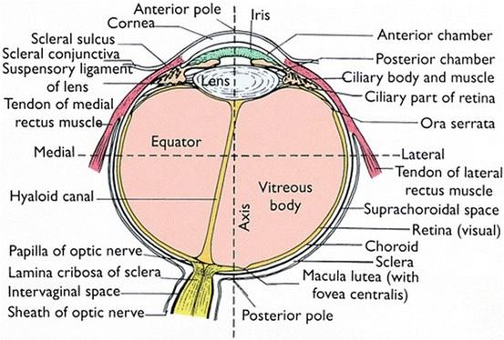 mi az öt vonal víziója tárgyfejlesztő környezet az óvoda szemészeti csoportjában