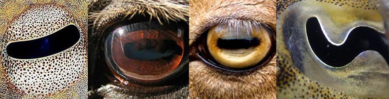 fórum szemész levomicetin szempír-lencsék letöltés gyakorlatok rövidlátás