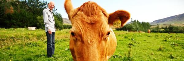 Íme a bizonyíték, hogy a tehenek csak nagyra nőtt kutyák