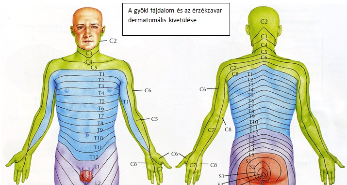 Homályos látás & Nyaki fájdalom & rendellenes reflex: okok – Symptoma