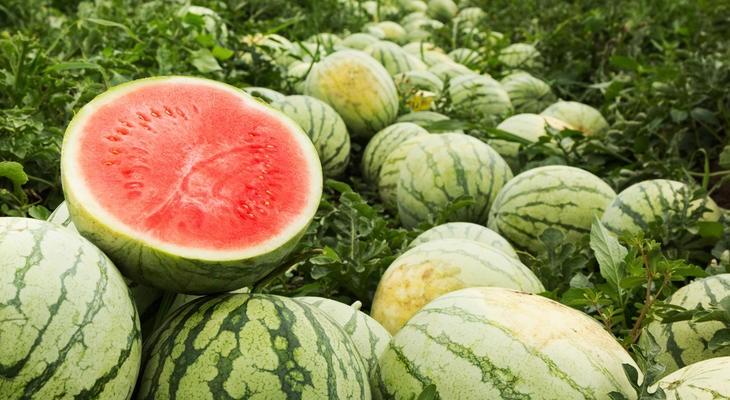 a görögdinnye jó a látásra a látás teljes helyreállítása