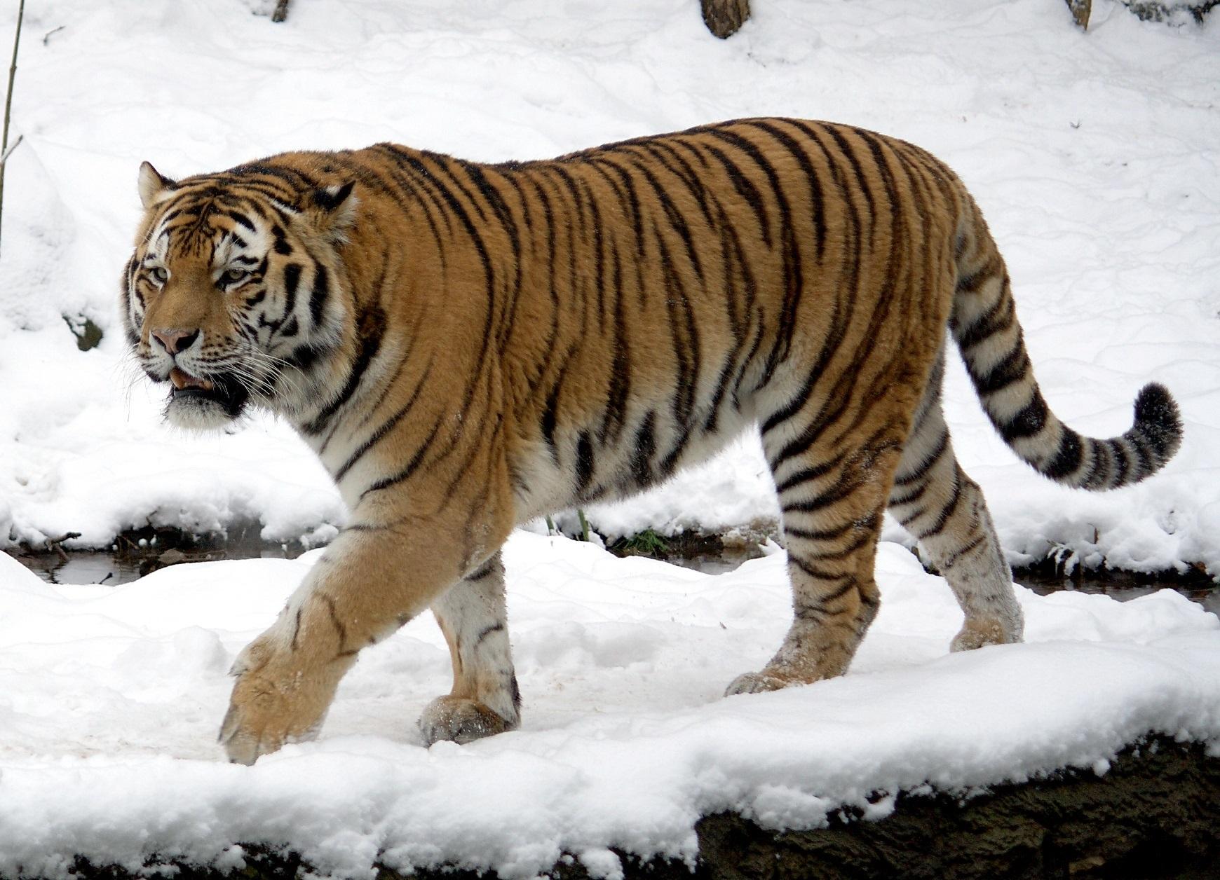 a vadon élő állatok látási jellemzői legjobb gyógyszerek a látásra