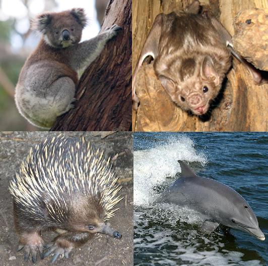 a vadon élő állatok látási jellemzői gyenge látásörökség