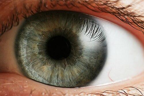 A szem felépítése, szerkezete
