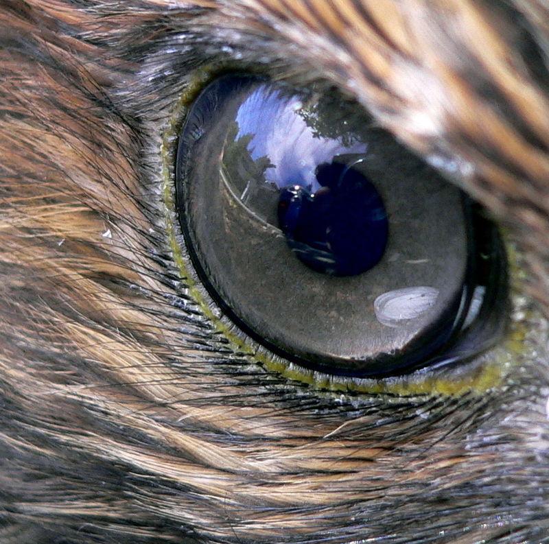 a legjobb látás az állatoknál asztal a látás javítása érdekében