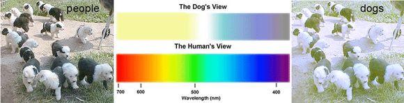 Ahogy a látással rendelkező személy látja