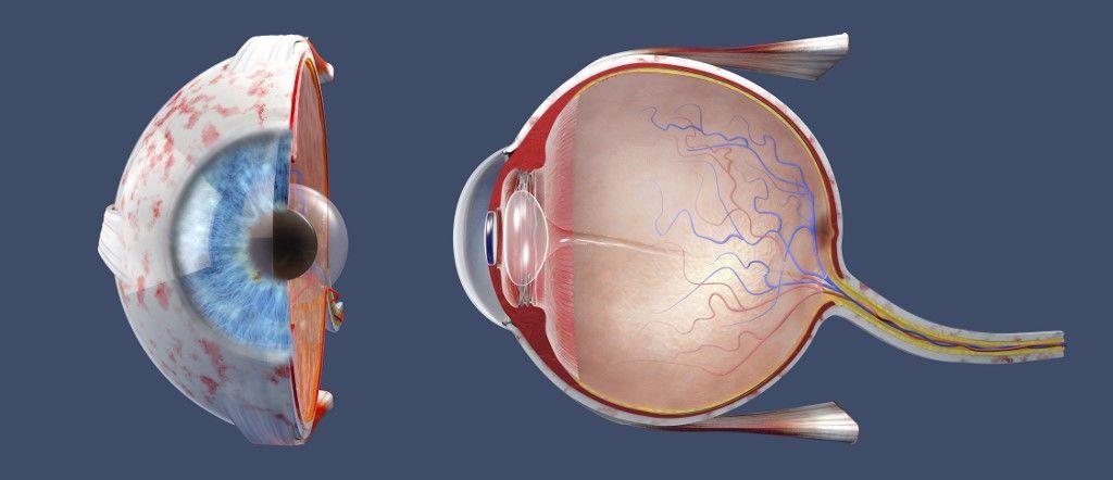Visszanyerhetik a vakok a látásukat egy új magyar kutatás szerint