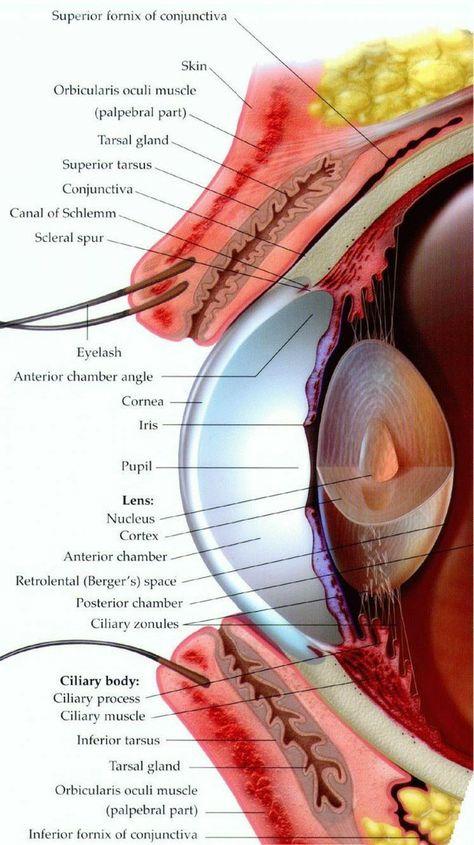 Jóga myopia: gyakorlatok és szemmasszázs - Lencsék August