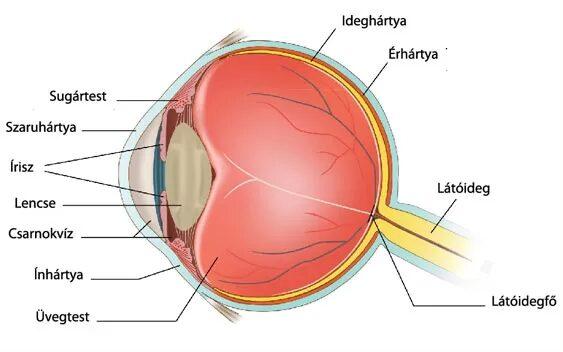 betegség látási problémái