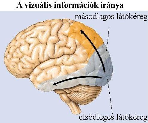 betűkkel ellátott táblázatok a látásvizsgálathoz ami a látásélességhez szükséges