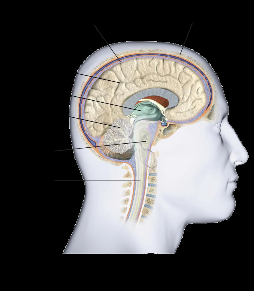 hogyan kapcsolódik a látás az agyhoz