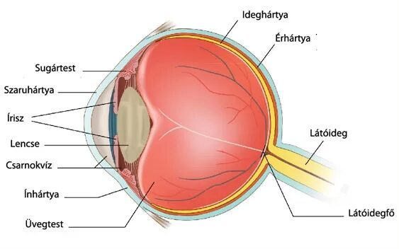 tonsillitis homályos látás)