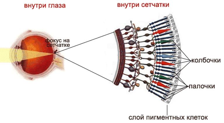 látáskárosodás myopia hyperopia színvakosság