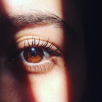 szem látás rákfélék