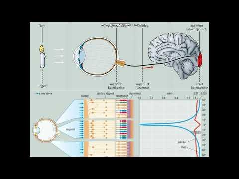 Gyakorlatok a szem számára az asztigmatizmusban - Injekciók September