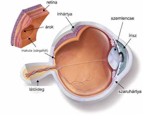 szemcseppek a látási lista javítása érdekében