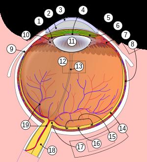 Kamerarendszer, a szem és a látás, a szem felépítés - Oktel Kft.