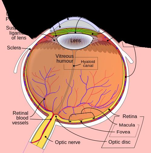 anisocoria látás
