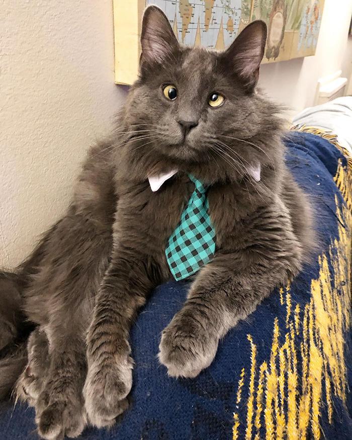 Index - Tudomány - Ezt látják a macskák