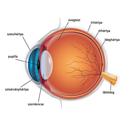 yut felelős a látásért alkonyatkor hogyan lehet a módszerrel helyreállítani a látást