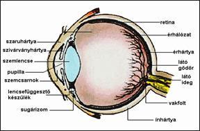 10 termék a látás javítására - Víz September