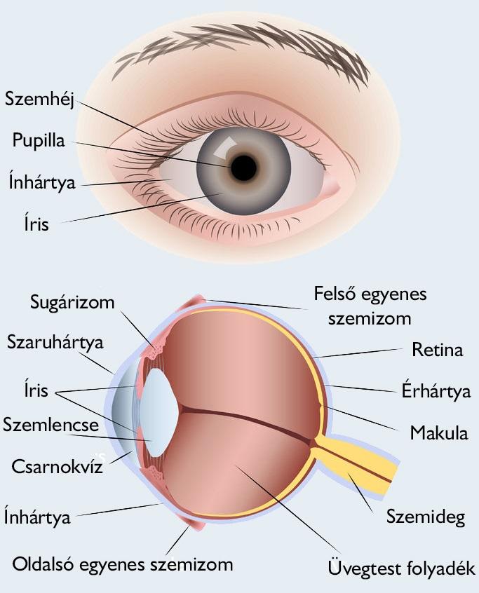 javítja a látást természetes termékekkel