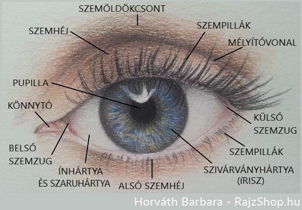 a látás gyengül a szem előtt