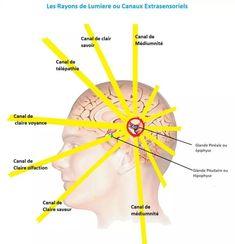 Hogyan lehet rövid idő alatt helyreállítani és javítani a látást otthon - Retina
