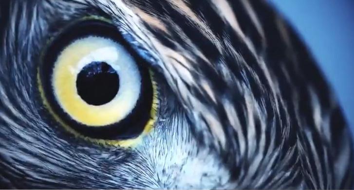 amit az ember látással lát képzés a látásvideóhoz