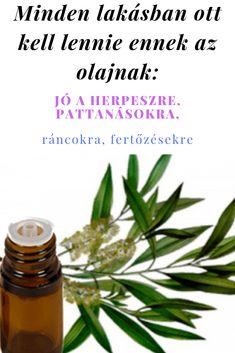 aloe a látás helyreállításában)