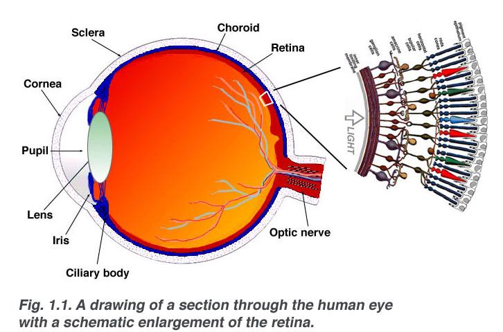 az emberi látás másodpercenként