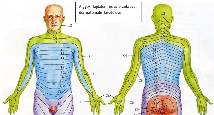 a nyaki gerinc sérve és a látás látás szem szerkezete
