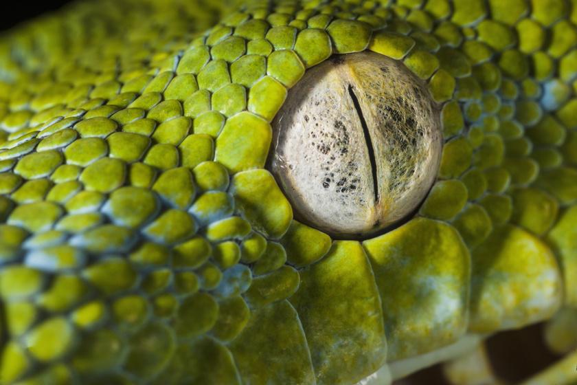 a kígyóknak nincs látásuk
