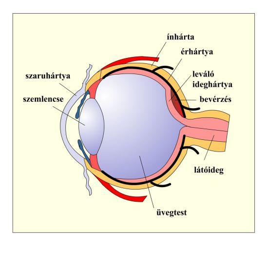 látási hibák ami 150% -os látást jelent