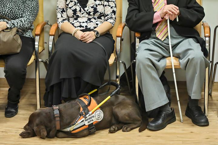 Távoli segítségnyújtás látássérült emberek számára – Távszem