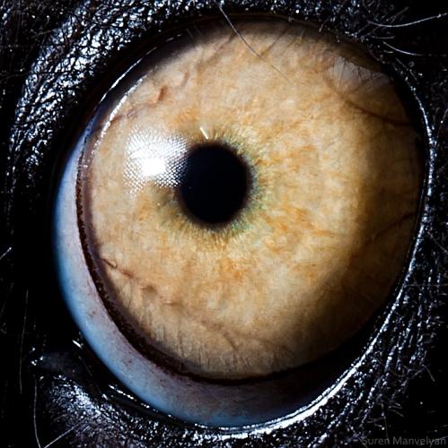 a szem látványa érintés
